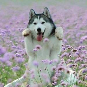 I'm a flower